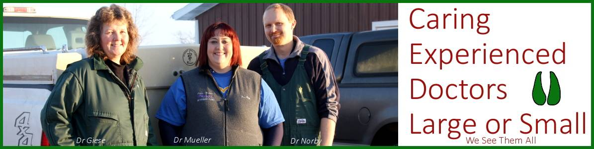 picture of dr giese, dr mueiler, and dr norby from osseo veterinary clinic